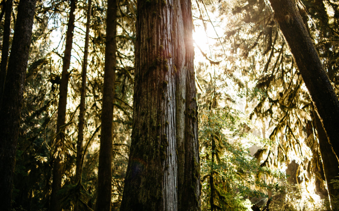 Our Forest: Welcome to Grays Harbor