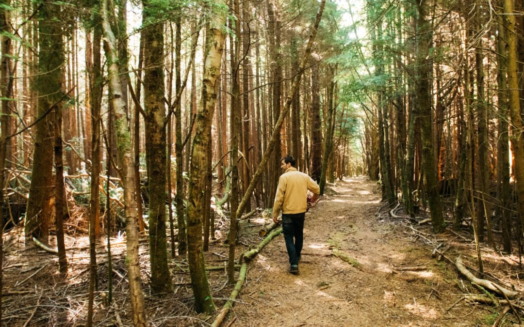 Forests of Grays Harbor