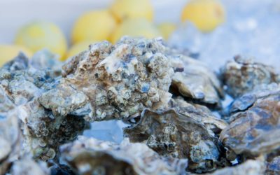 Where to Find Fresh Oysters in Grays Harbor