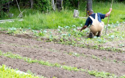 Summer Time Farmstands: Eat Fresh!